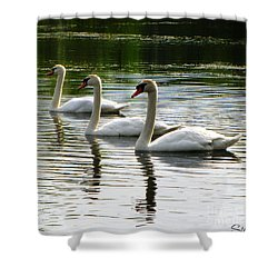 Triplet Swans Shower Curtain