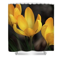 Shower Curtain featuring the photograph Triplets by Connie Handscomb