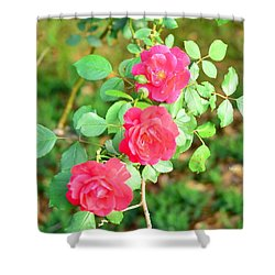 Triplets Shower Curtain by Maria Urso
