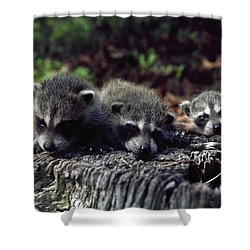 Triplets Shower Curtain by Sally Weigand