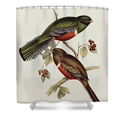 Trogon Collaris Shower Curtain by John Gould
