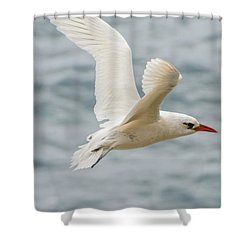 Tropic Bird 2 Shower Curtain by Werner Padarin