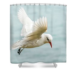 Shower Curtain featuring the photograph Tropic Bird 4 by Werner Padarin