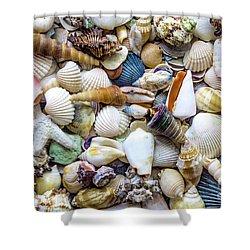 Tropical Beach Seashell Treasures 1529b Shower Curtain