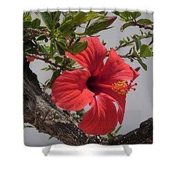 Tropical Beauty Shower Curtain