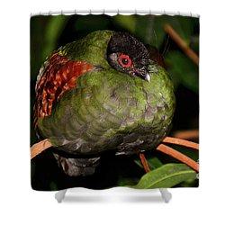 Tropical Bird Shower Curtain