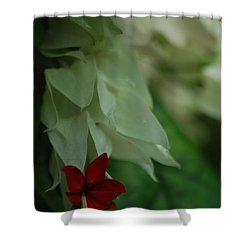 Shower Curtain featuring the photograph Tropical Bleeding Heart by Ramona Whiteaker