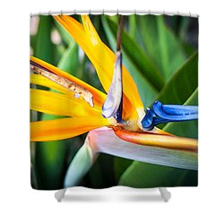 Shower Curtain featuring the photograph Tropical Closeup by T Brian Jones