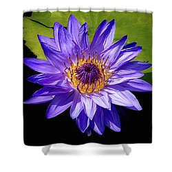Tropical Day Blooming Water Lily In Lavender Shower Curtain by Julie Palencia