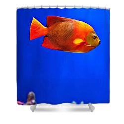 Tropical Fish 1 Shower Curtain by Art Block Collections