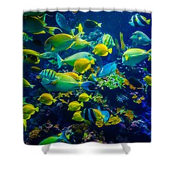 Tropical Fishes Of Maui Shower Curtain