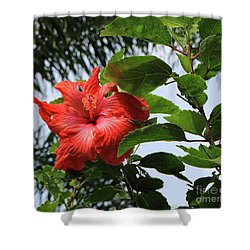 Tropical Hibiscus Shower Curtain by Mary Haber