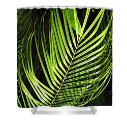 Shower Curtain featuring the photograph Tropical Palm by Carol Sweetwood