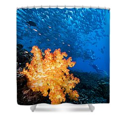 Tropical Reef Scene Shower Curtain by Dave Fleetham - Printscapes