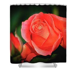 Tropicana Rose Shower Curtain by Albert Seger