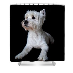 Trot Posing Shower Curtain