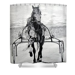 Trotter Shower Curtain by Melita Safran
