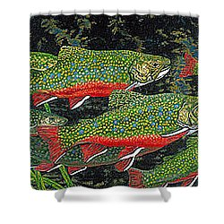 Trout Art Brook Trout Fish Artwork Giclee Wildlife Underwater Shower Curtain by Baslee Troutman