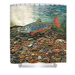 Trout Art Fish Art Brook Trout Suspended Artwork Giclee Fine Art Print Shower Curtain by Baslee Troutman