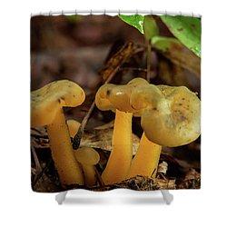 Trugid Glabrous Highlighted Mushroom Cluster Shower Curtain