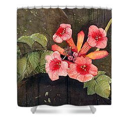 Trumpet Vine II Shower Curtain