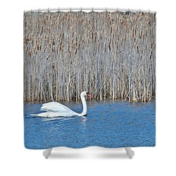 Shower Curtain featuring the photograph Trumpeter Swan 0967 by Michael Peychich