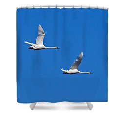 Shower Curtain featuring the photograph Trumpeter Swan 1727 by Michael Peychich