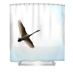 Trumpeter Swan In Flight Shower Curtain