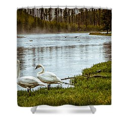 Shower Curtain featuring the photograph Trumpeter Swan by Robert Bales
