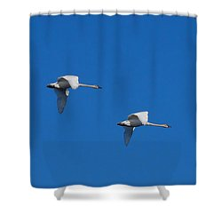 Shower Curtain featuring the photograph Trumpeter Swans 1725 by Michael Peychich