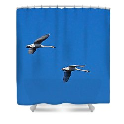 Shower Curtain featuring the photograph Trumpeter Swans 1726 by Michael Peychich