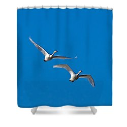 Shower Curtain featuring the photograph Trumpeter Swans 1735 by Michael Peychich