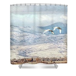 Shower Curtain featuring the photograph Trumpeter Swans Winter Flight by Jennie Marie Schell