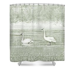 Shower Curtain featuring the photograph Trumpeter Swan's Winter Rest Green by Jennie Marie Schell