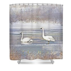 Shower Curtain featuring the photograph Trumpeter Swan's Winter Rest by Jennie Marie Schell