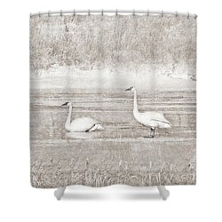 Shower Curtain featuring the photograph Trumpeter Swan's Winter Rest Beige by Jennie Marie Schell