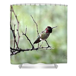 Trumpeting Hummingbird Shower Curtain