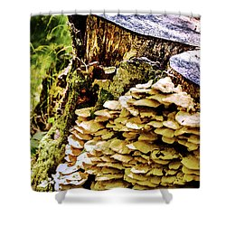 Trunk And Mushrooms Shower Curtain