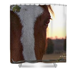 Shower Curtain featuring the photograph Trusting by Betty Northcutt