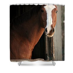 T's Window Shower Curtain by Angela Rath