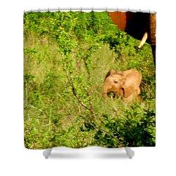 Tsavo Calf Shower Curtain