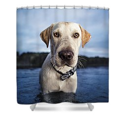 Tucker Shower Curtain