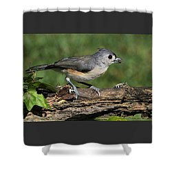 Tufted Titmouse On Tree Branch Shower Curtain