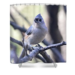 Tufted Titmouse Shower Curtain by Trina Ansel