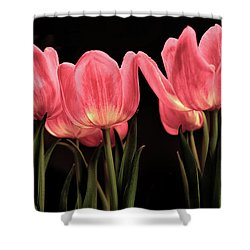 Tuilp Shower Curtain