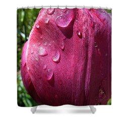 Tulip After The Rain Shower Curtain by Jean Bernard Roussilhe