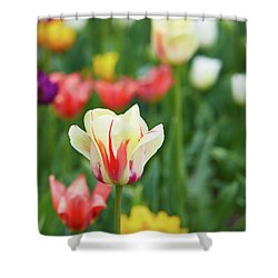Tulip Bed Shower Curtain