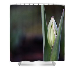 Tulip Bud Shower Curtain