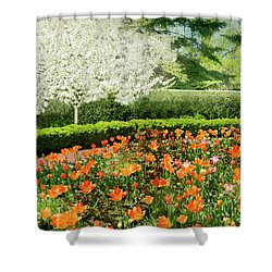 Shower Curtain featuring the photograph Tulip Cafe by Diana Angstadt