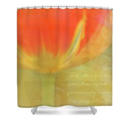Tulip Shower Curtain by Catherine Alfidi